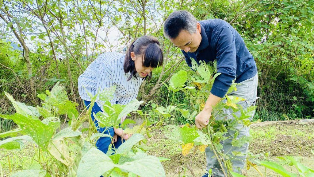 罗老师带学生在菜园摘辣椒
